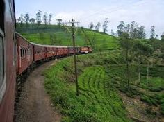 Image result for horton place picture sri lanka Sri Lanka, Vineyard, Places, Pictures, Outdoor, Image, Photos, Outdoors, Outdoor Games