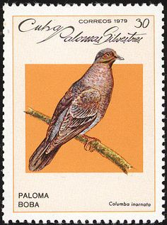 Plain Pigeon stamps - mainly images - gallery format