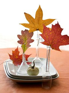 What to do with Fall leaves...