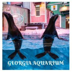 We are proud to welcome two rescued sea lion pups into our care at Georgia Aquarium. Giant Pacific Octopus, African Penguin, Georgia Aquarium, Reef Shark, Marine Biology, Gentle Giant, Ocean Life, Conservation, Pup