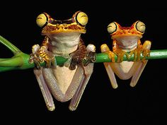 Like father, like son. Frogs are amazing creatures.