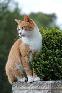 - Orange Cat - Ideas of Orange Cat - Orange cat picturesque! The post Orange cat picturesque! appeared first on Cat Gig. Cute Cats And Kittens, I Love Cats, Crazy Cats, Cool Cats, Amor Animal, Mundo Animal, Orange Tabby Cats, Red Cat, Pretty Cats