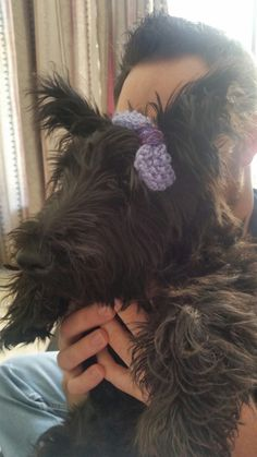 My cute Scottie dog with a Bow
