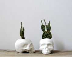 Ceramic Skull Planter - perfect for cactus succulent or air plant