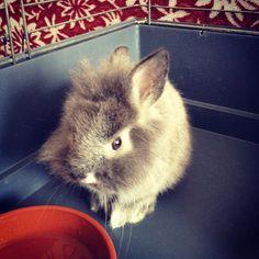 Rabbit :-)