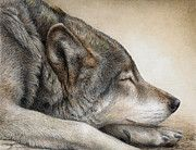 Watercolor Paintings - Wolf Nap by Pat Erickson