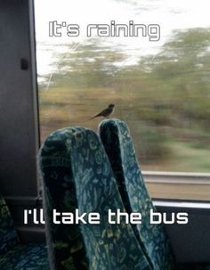 010-funny-animal-pictures-with-captions-013-bird-takes-a-bus.jpg 600×771 pixels