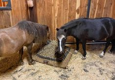 Sharing is caring! ❤️ #miniaturehorse #therapyhorse #minihorses Slow Feeder, Feed Bags, Livestock, Horses, Pillows, Animals, Animales, Animaux, Animal