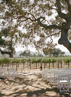 Sunstone Villa wedding ceremony. Vintage chandeliers hang from oak trees in the vineyard. Photography: Erin Leigh - www.thebowerygirl.com  Read More: http://www.stylemepretty.com/california-weddings/2014/04/01/romantic-vintage-wedding/
