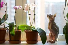 Как правильно пересаживать комнатные растения Весной у большинства комнатных растений заканчивается период покоя, они пробуждаются и начинают выпускать листики, давать новые побеги. В это время года им очень нужна порция питательных веществ или свежая почва. Март и апрель — идеальное время для цветочных новоселий. О том, как правильно пересаживать комнатные растения, — узнаете из этой статьи на «Леди Mail.Ru».