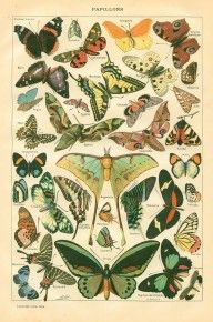 Free vintage butterfly print download.