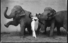 Elephant - Fashion (1955) by Richard Avedon