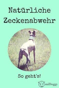 Hund | Zecken | Ideen | Tipps