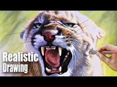 Drawing a Mountain Lion   Realistic Speedpainting - YouTube