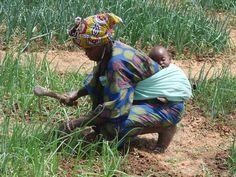 Weeding during dry season with sleeping baby. Farmer to Farmer Program, Dladie, Mali, W. Africa.