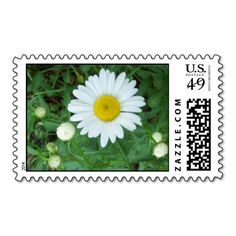A Shasta Daisy and Buds Stamps