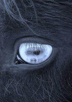 My Equestrian Dream | via Tumblr - http://ift.tt/2ssOCUN