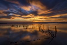 Picture taken in L´Albufera (Valencia- Spain)