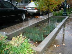 Jardineras en Portland que regresan el agua a la tierra - VeoVerde
