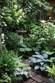 Tropical Garden Design, Vegetable Garden Design, Small Garden Design, Small Backyard Landscaping, Tropical Landscaping, Small Gardens, Outdoor Gardens, Gazebos, Shade Garden Plants