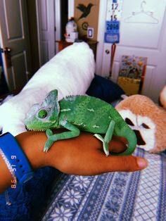 [New] The 10 Best Travel Today (with Pictures) Cute Creatures, Beautiful Creatures, Animals Beautiful, Cute Baby Animals, Animals And Pets, Funny Animals, Cute Reptiles, Reptiles And Amphibians, Chameleon Pet