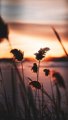 Whats Wallpaper, Sunset Wallpaper, Scenery Wallpaper, Cute Wallpaper Backgrounds, Nature Wallpaper, Nature Pictures, Cool Pictures, Beautiful Pictures, Aesthetic Backgrounds