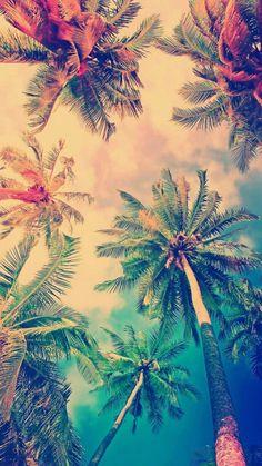 JUST a beautiful palms🌴🏝