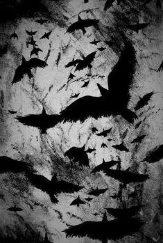 Black and white bird tattoo crows ravens Ideas Crow Art, Raven Art, Bird Art, The Raven, The Crow, Dark Fantasy Art, Crows Ravens, Flock Of Crows, Arte Obscura