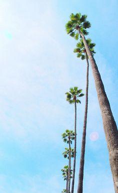 ah palm trees blue sky