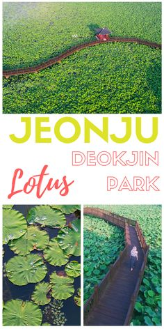SOUTH KOREA // Deokjin Lotus Park // JEONJU