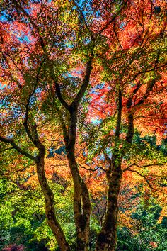 Nature's burst of color- just fantastic!