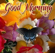 Good Morning With Animated Butterfly Pictures, Photos, and Images for Facebook, Tumblr, Pinterest, and Twitter