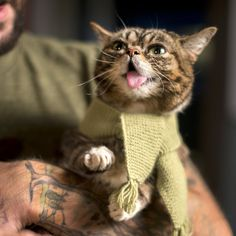 """It's scarf o'clock, everybody!"" 