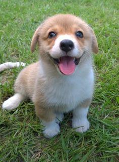 Hi! Let's play!
