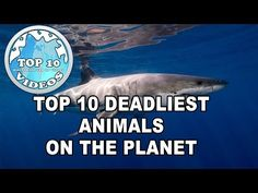 Top 10 deadliest animals on the planet - YouTube