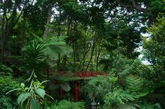 Tropical Garden, Funchal, Madeira.