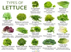 18 Different Types of Lettuce with Pictures Green Vegetables Name, List Of Vegetables, Fruits And Veggies, Types Of Lettuce, Types Of Salad, Permaculture, Vegetable Pictures, Types Of Herbs, Different Types Of Vegetables