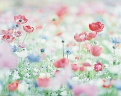 //field of spring by sunao-films//