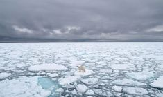 How melting glaciers have accelerated a shift in Earth's axis   Climate change   The Guardian Longyearbyen, Polar Bear Facts, Polar Bears International, Best Swimmer, Sea Ice, Photography Competitions, Open Water, Sea Birds, Climate Change