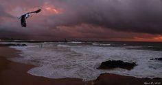 Olhares.com Fotografia   �Neophyte   Ramo de Oliveira