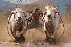 finishing by dewan irawan Human Photography, Documentary Photography, Beautiful Landscape Photography, Beautiful Landscapes, Bull Painting, Minangkabau, India Architecture, Indian Art Paintings, Indian Man
