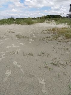 Sullivan's Island Beach is a treasure. Very natural and a quiet haven for the locals. It is must see for anyone who likes a good book, shelling and and a ride on a wave. Sullivans Island Beach, The Locals, Good Books, Waves, Nature, Outdoor, Outdoors, Naturaleza, Outdoor Games