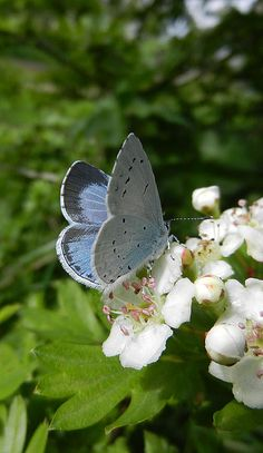sky blue and butterful!
