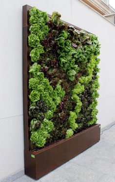 38 Popular Diy Vertical Garden Design Ideas To Try Asap - Do you live in the city and would love to have a vegetable garden, but are constrained by a small garden space? If you really want to grow your own fr. Vertical Garden Design, Small Garden Design, Vertical Farming, Vertical Gardens, Indoor Garden, Indoor Plants, Indoor Outdoor, Outdoor Areas, Jardim Vertical Diy