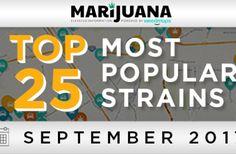 25 Most Popular Marijuana Strains in September
