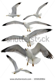 Group of seagulls on a white background