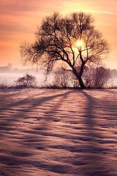 Winter Star by ~Thinking-Silence on deviantART