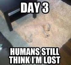 Until they vacuum... lol