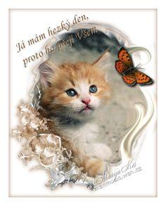 Hezký den obrázky, citáty a animace pro Facebook (stránka 3) - ObrazkyAnimace.cz Cute Cats, Humor, Pretty Cats, Humour, Funny Photos, Funny Humor, Comedy, Lifting Humor, Jokes