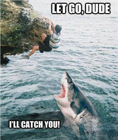 funny shark week catch you